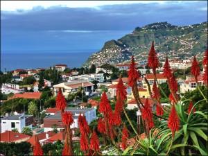 Pico_dos_Barcelos,_Funchal